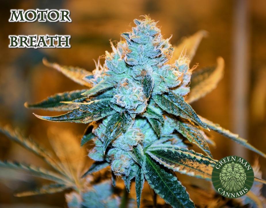 MOTORBREATH – Green Man Cannabis